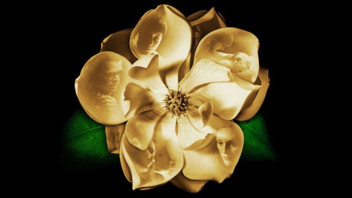 Magnolia: một phim viết về quá khứ...